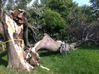 Image of a broken tree.